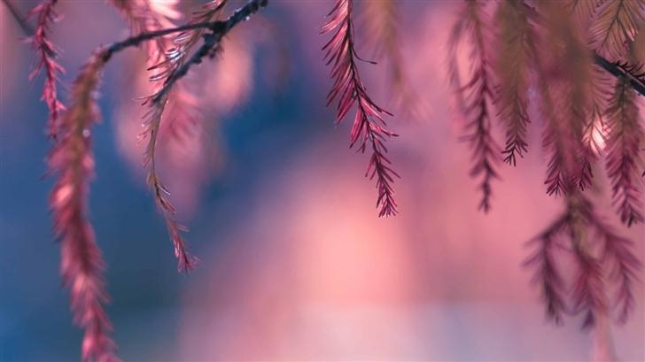 Pink Conifer Tree Branch Mac Wallpaper
