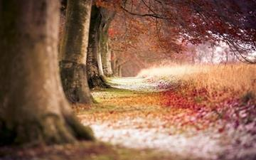 Forest Trees Path Fallen Leaves Autumn Mac wallpaper
