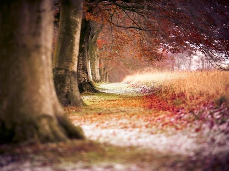 Forest Trees Path Fallen Leaves Autumn Mac Wallpaper