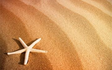 Starfish and Sand All Mac wallpaper