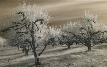 Apple Hill In Autumn Mac wallpaper