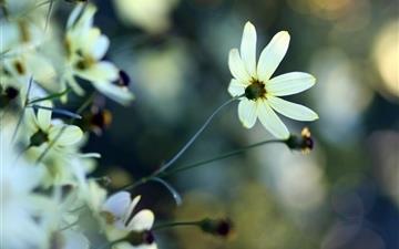 White Small Flowers Mac wallpaper