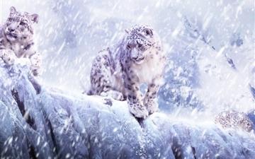 Leopards In The Snow Mac wallpaper
