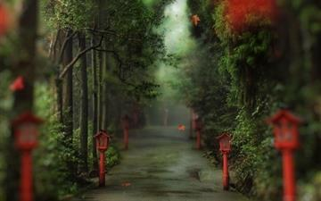Alley in the forest Mac wallpaper