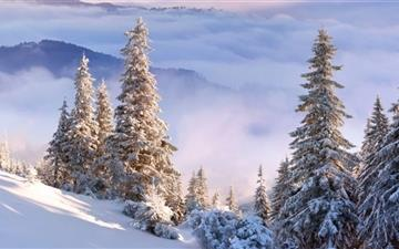 Winter Forest On Slope Mac wallpaper