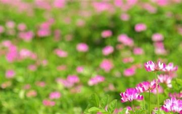 Pink Flowers Mac wallpaper