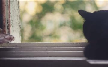Black Cat Near Window All Mac wallpaper