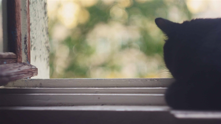 Black Cat Near Window Mac Wallpaper