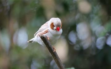 Bird Spain Mac wallpaper