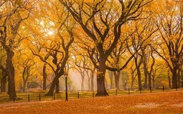 Central Park Fall Foliage Mac wallpaper
