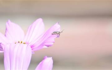 Little Bug Mac wallpaper