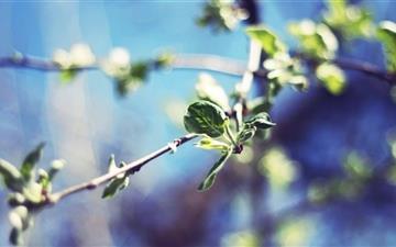 Pear Tree Twigs Mac wallpaper