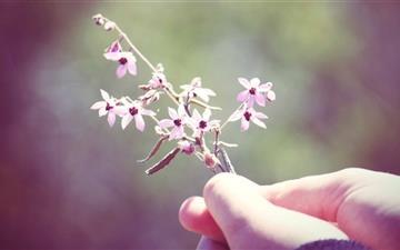 Small Flowers Twig Mac wallpaper