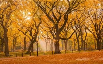 Central Park Fall Foliage Mac wallpaper