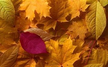 Fall Leaves Mac wallpaper