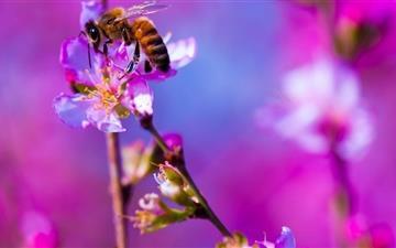 Bee Blossom Tree Spring Mac wallpaper