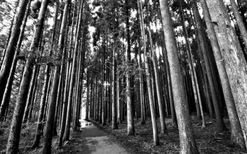 Forest Trail Mac wallpaper