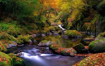 Forest creek autumn Mac wallpaper