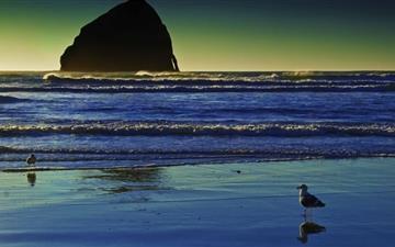 Seagulls On The Beach Mac wallpaper