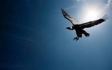Bird In The Sky Mac wallpaper