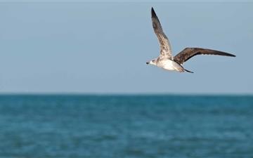 Seagull In Morocco Mac wallpaper