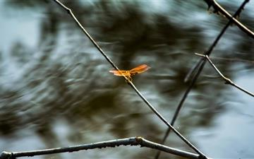 Flying Dragonfly Mac wallpaper
