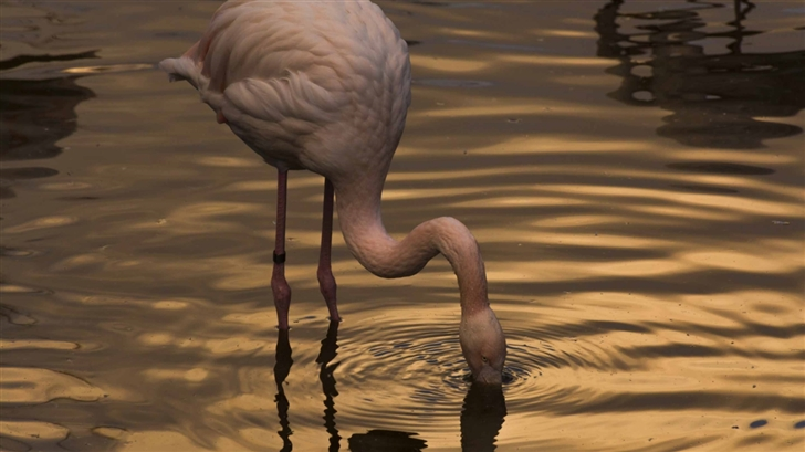 Night With Flamingo Mac Wallpaper