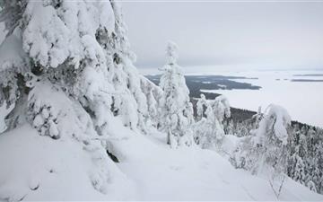 Mountain Forest Winter Mac wallpaper