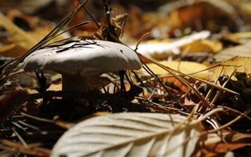 Mushroom Fall Mac wallpaper