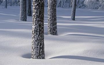 Tree Shadows On Snow Mac wallpaper