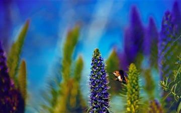 Hummingbird Pride Of Madeira Flower All Mac wallpaper