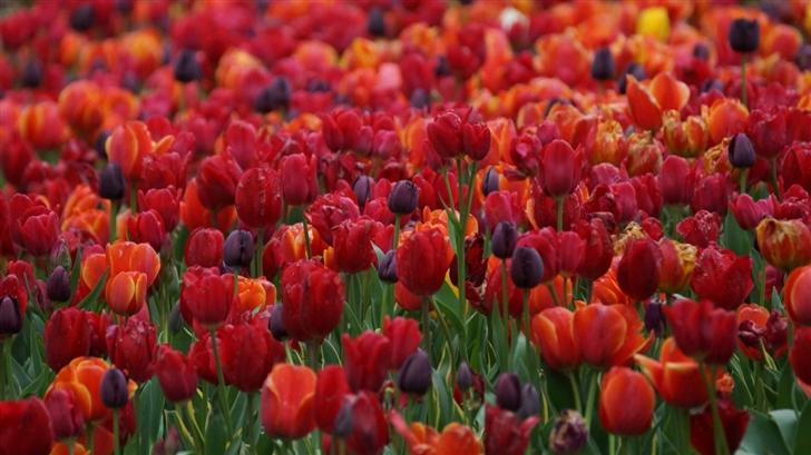 The Springtime Colour Mac Wallpaper