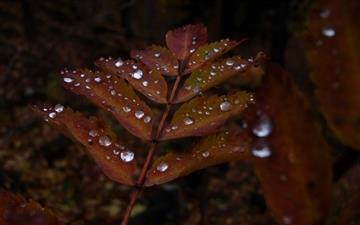 Wet Rust Colored Leaves Mac wallpaper