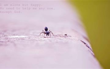 I Am Alone Mac wallpaper