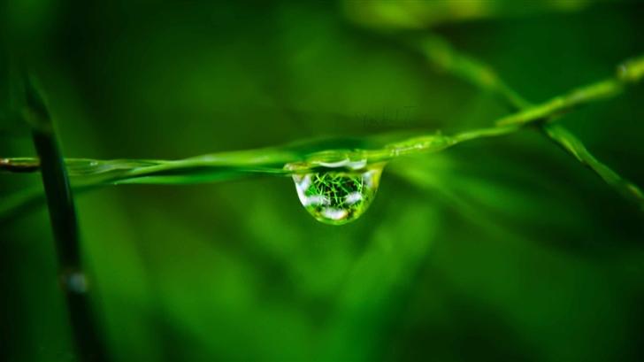 Water Drop On Grass Mac Wallpaper