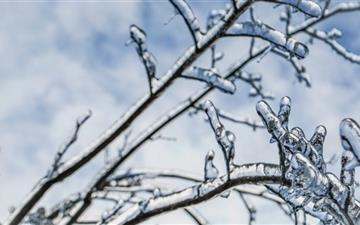 Branches Engulfed In Ice Mac wallpaper