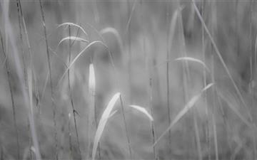 Grass Black And White Mac wallpaper