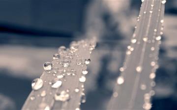 Beautiful Water Drops Mac wallpaper