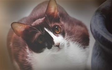 Cute Cat Mac wallpaper