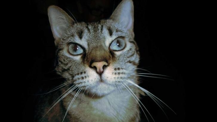 Cat Eyes Mac Wallpaper