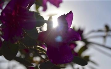Sun Through Flowers Mac wallpaper