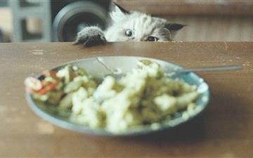 Food Thief Mac wallpaper