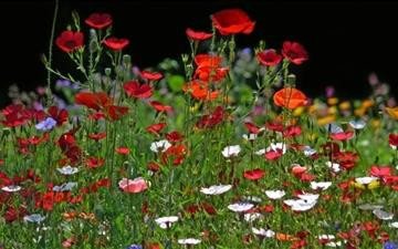 Spring Meadow Flowers Mac wallpaper