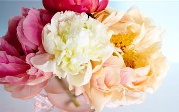 Peony Bouquet Mac wallpaper