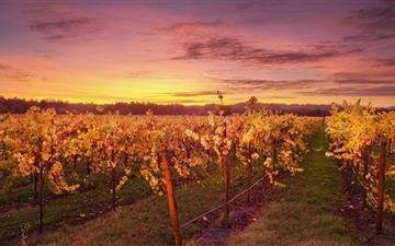 The God Of Wine Mac wallpaper