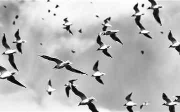 Bird Pattern Mac wallpaper