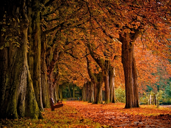 Park Autumn Mac Wallpaper
