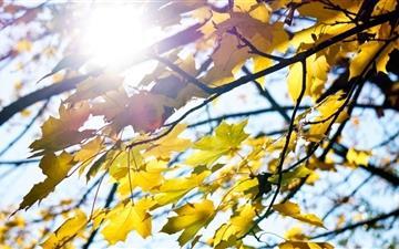 Autumn View Mac wallpaper