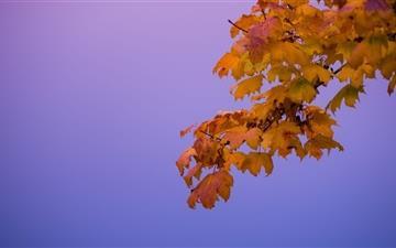 The Leaves Mac wallpaper