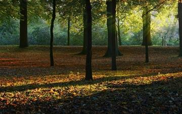 Autumn Light Mac wallpaper